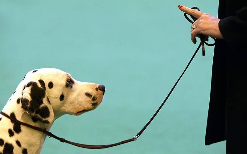 Mala škola ponašanja za pse (i gazde)