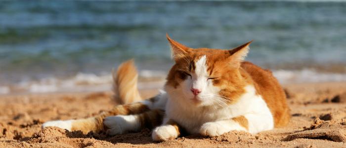 Kako olakati ljetne vruine vaim kunim ljubimcima_blog