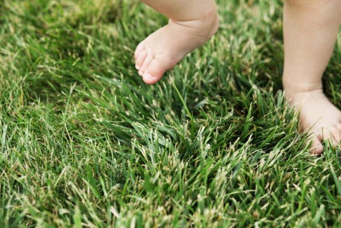 stopala u travi